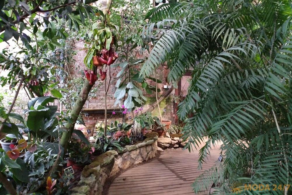 Пальмовая оранжерея. Репетиция весны – Аптекарский огород
