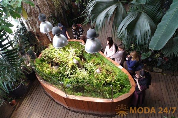 Экспозиция «Сад хищных растений». Репетиция весны – Аптекарский огород