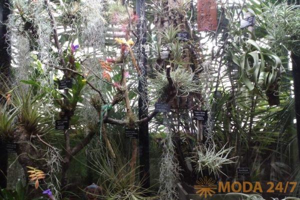 Коллекционные растения. Репетиция весны – Аптекарский огород