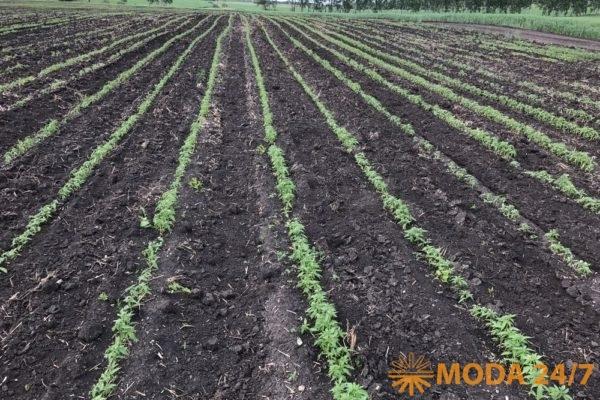 Сельхозпредприятие марки