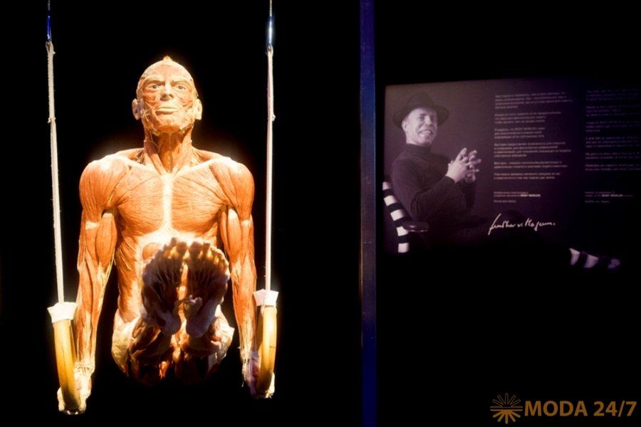 Спортсмен на кольцах. Body Worlds – занимательная анатомия