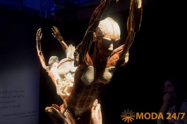 Body Worlds – занимательная анатомия. Торс женщины в разрезе